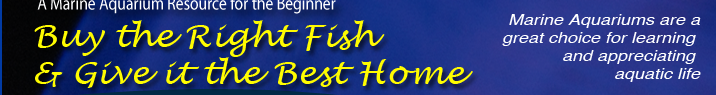 Buy the Right FIsh and Give it the Best Home