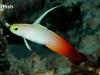 dartfish2